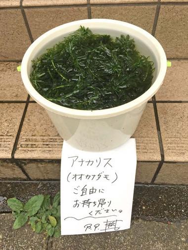 2017703hitori_3